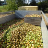 Frischer Apfelsaft zum Weltkindertag: Aramarks Wohltätigkeitstag lässt in diesem Jahr Kinderherzen höher schlagen