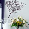 Die Nelke: Eine göttliche Frühlingsbotschafterin in Rüschen / Mit purer Blütenkraft in den Frühling (FOTO)