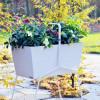 Herbstliches Gartenglück / Willkommen im goldenen Herbst mit Lenzrose und Besenheide (FOTO)