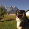 Urlaub an der langen Leine in der Tiroler Zugspitz Arena