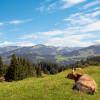 20 Jahre nachhaltiger Käsegenuss