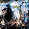 Ein Jubiläumstag im Zeichen der Pferde (FOTO)