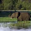 Vom Sommer nicht genug – Mit Wilderness Safaris die Sonnentage in Afrika verlängern