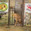 Neue Gefährtin für Kriegs-Löwe Saeed aus Syrien