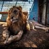 """Wildtiere stehen kurz vor ihrer Rettung aus """"Europas schlimmstem Zoo"""""""