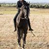 Magische OSTWIND-Momente im EQUILALAND – Highlight ist Pferdetrainerin Kenzie Dysli als Star-Gast bei EQUILA im SHOWPALAST MÜNCHEN (FOTO)