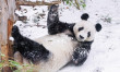 Schneespaß im Tiergarten – Gefährdung in der Wildbahn! Tiergarten Schönbrunn tritt globalem Artenschutz-Bündnis bei