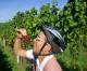 Weinlese in der Pfalz – bequem und genüsslich  mit E-Bikes  erleben